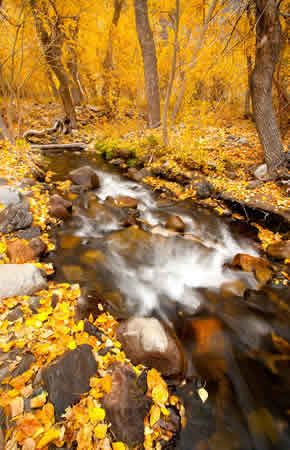 easter sierra fall colors photography workshops 2018 mcgee creek canyon