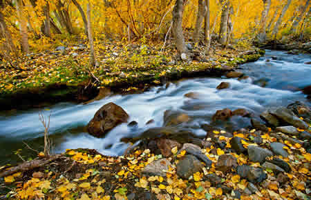 Easter sierra fall colors photography workshop 2018 mcgee creek canyon